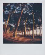 Curvi al tramonto