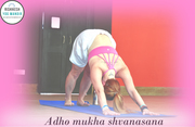Adho Mukha Shvanasana |Downward Facing Dog Pose|