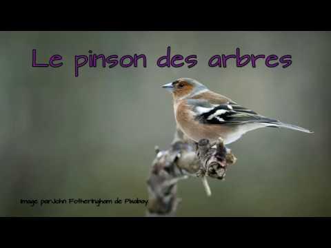 Blind test : savoir reconnaitre 18 chants et cris d'oiseaux communs