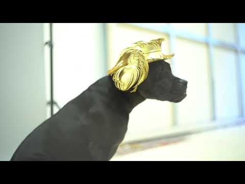 Haute Dogs - Behind the scenes
