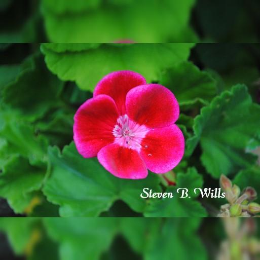 WhatsCropDp_4_11_2020_1_04_37_PMred flower