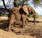 Samburu Safari