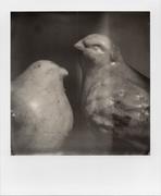 Blackbird(s)_1