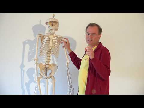 Yoga bei Schulter Impingement - Yoga hilft