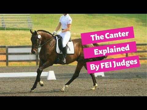 The Canter In Dressage Explained By FEI Judges Cesar Torrente and Bernard Maurel