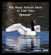 AA Website--Origin pageFantasy Swan