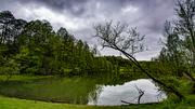 Pond along 321 near Little Pigeon River 4-30-20