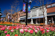 Deserted Pearl Street mall with tulips