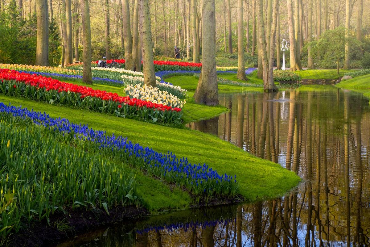 ჰოლანდია, ტიტა, ტიტების მინდვრები, ტიტების ბაღი, კუკენჰოფი, კუკენჰოფის ბაღი, qwelly, photography