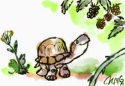 turtle berries