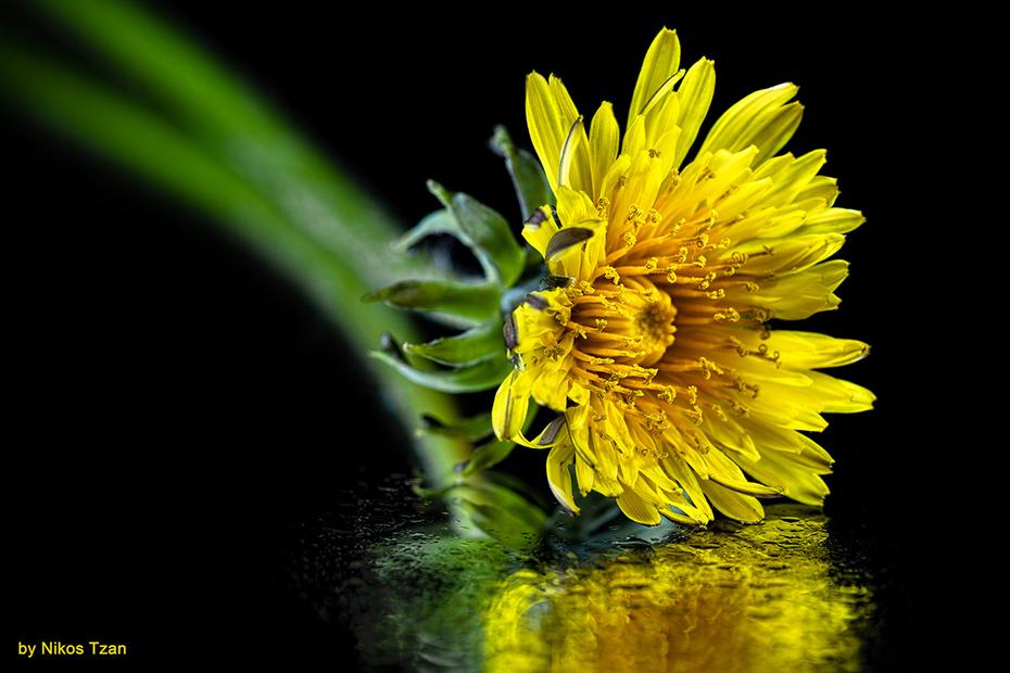 Yellow beauty 2
