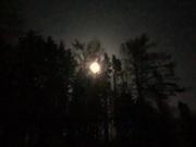 Der Mond hinter den Bäumen