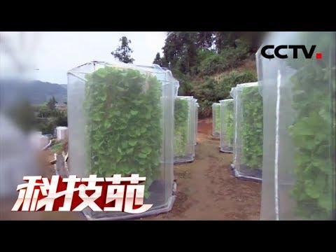 《科技苑》  蔬菜摞着长 亩产增三倍 | CCTV农业 Agricultura Tecnologia Alimento