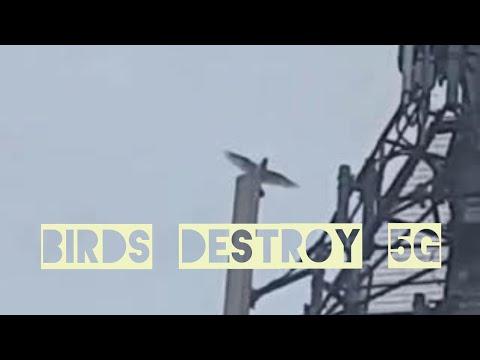 Birds attack 5G tower