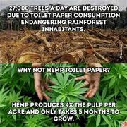 why not hemp