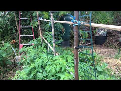 Aerial Lines Supporting Ladder Trellises in the Kitchen Garden