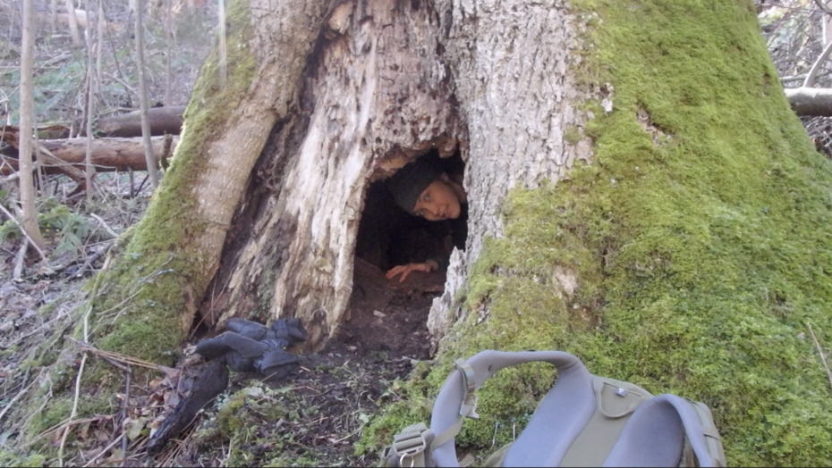 We Found a Creature in a Hollow Tree