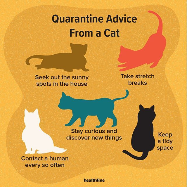 Quarantine Advice From a Cat - Seek out the sunny spots in the house - Take stretch breaks - Stay curious and discover new things - Keep a tidy space - Contact a human every so often