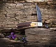 2020 - Tuna Valley - Phoenix Jack - Burnt Stag - Damascus Blade