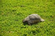 Ο... λαός και η χελώνα