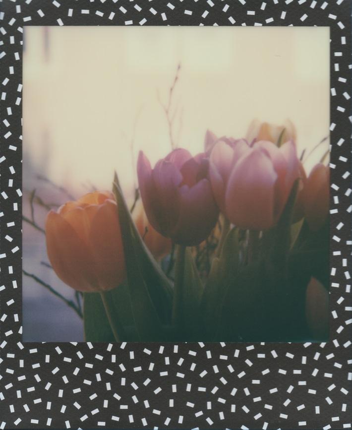 Tulipani #16
