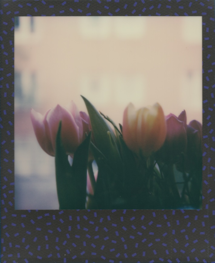 Tulipani #17