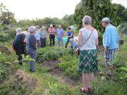 North London Organic Gardeners and Incredible Edible Barnet