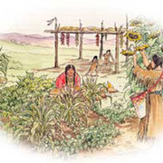Native Gardening