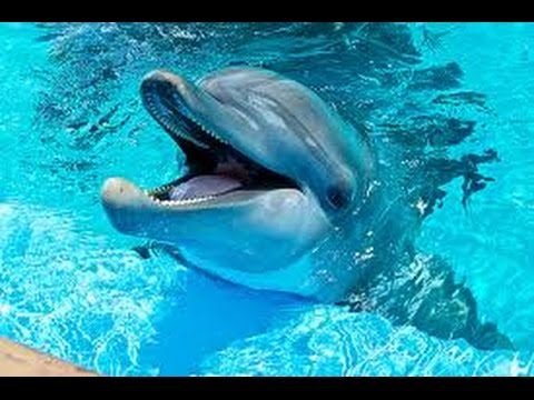 Dauphins merveilleux! relaxation music. Voyage with dolphins!-F. Amathy-Océan-Musique zen/bien-être