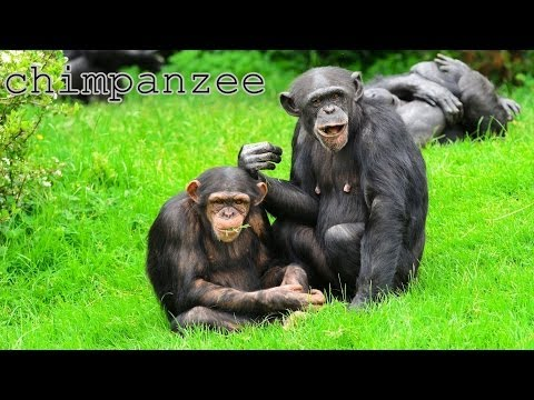 African animals their voices and sounds