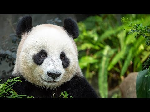 Voices and sounds of Asian animals. Part 1.