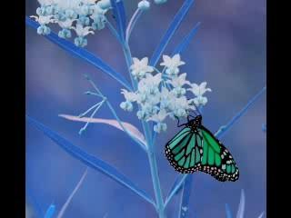 eu sou como a borboleta