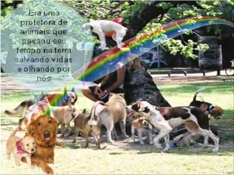 O Ceu dos animais