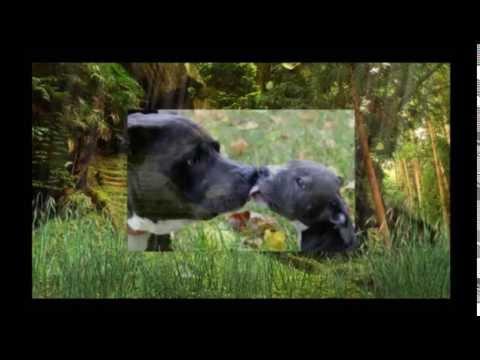 Misericordiosa Prece Aos Animais