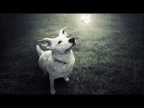 A Espiritualidade dos animais e os seus processos reencarnatórios e evolutivos