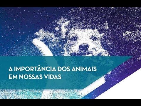 A importância dos Animais em nossas vidas