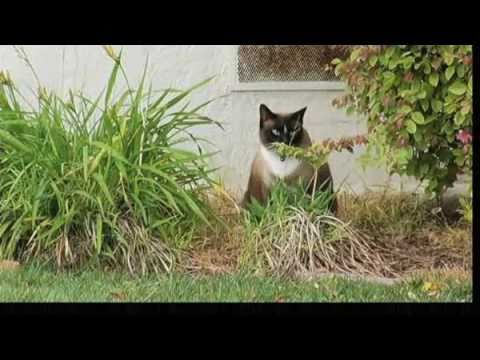 Klepto Kitty the Cat Burglar