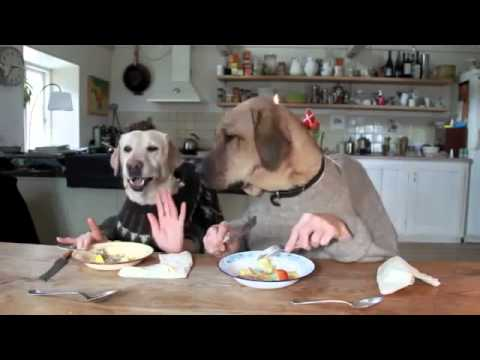 Two dogs dining in busty restaurant