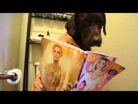Ruff Dog Day Official Video