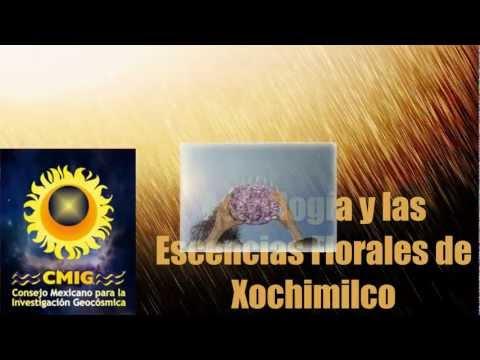 ASTROLOGIA Y ESCENCIAS FLORALES DE XOCHIMILCO PARTE 2