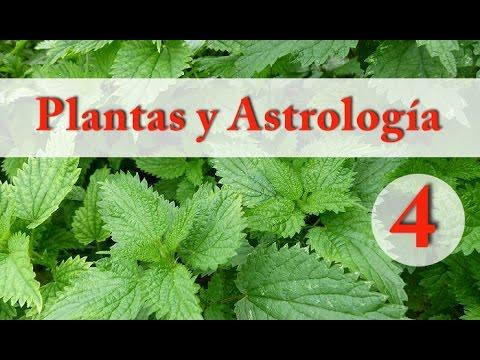 Plantas y Astrología - 4