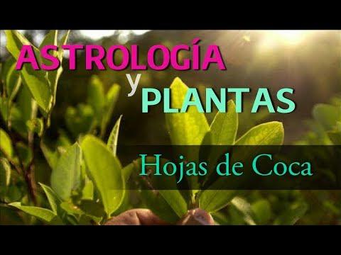 Astrología y Plantas: La COCA