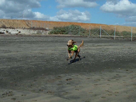 Gracie on the Run