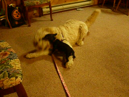 Bella playing with the BIG girl at 4 months old 096