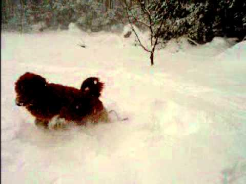 Banjo's Snow Day