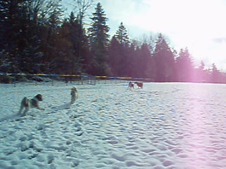 Finn and Mabel chase dogs in the snow