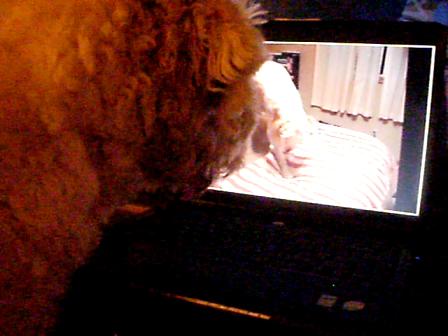 Darwin Watching Albus