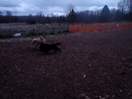 ayla runs at marymoore