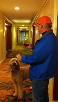 Gracie Doodle plays at the hotel