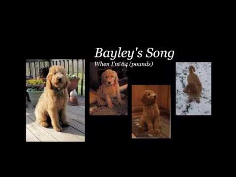 """Bayley's Song """"When I'm 64"""" (pounds)"""